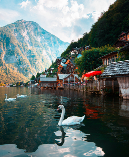 The Alps in Summer: 10 Things You Need to Know Before Visiting